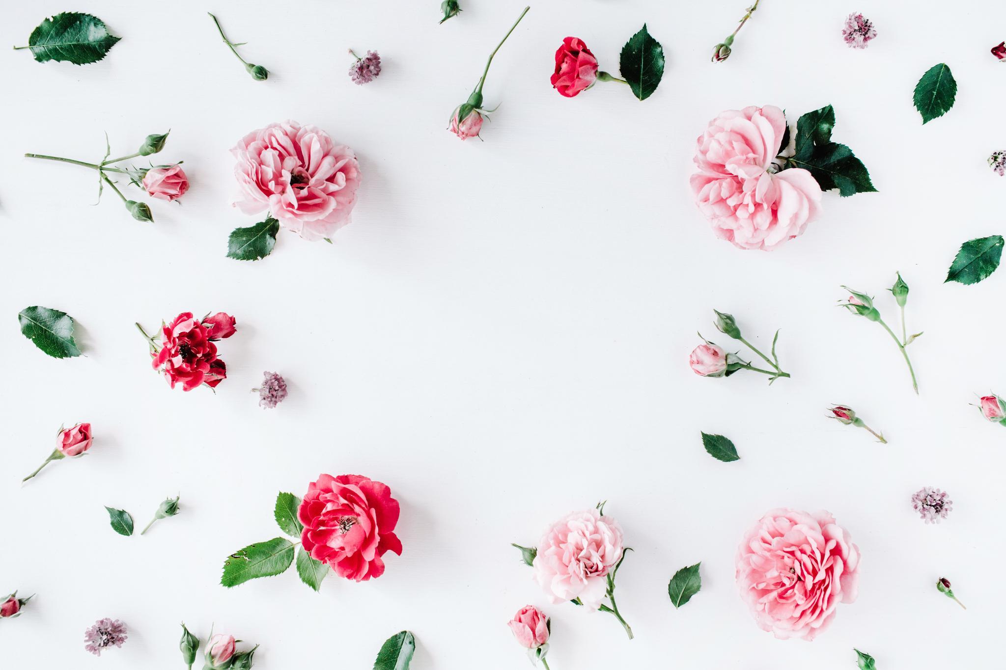 Organci Rose Toner